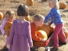 photo_pumpkin_patch