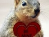 squirrel-heart